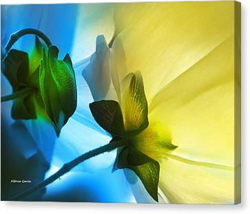 Canvas Print featuring the photograph Chicos by Alfonso Garcia