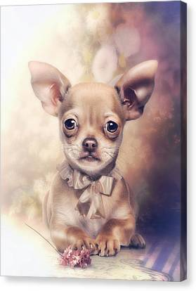 Chihuahua Puppy Canvas Print by Cindy Grundsten