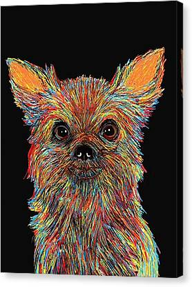 Chihuahua - Rose Canvas Print by Bert Hornbeck