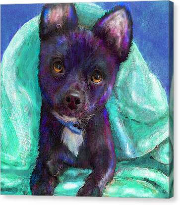 Chihuaua Canvas Print by Jane Schnetlage