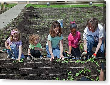 Children At Work In A Community Garden Canvas Print by Jim West