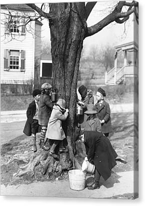 Children Tapping Maple Trees Canvas Print by Underwood Archives
