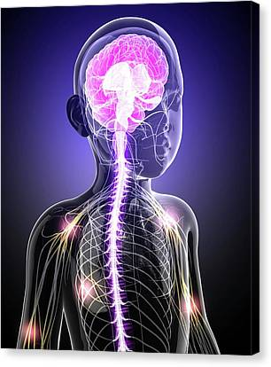 Child's Central Nervous System Canvas Print