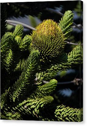 Chile South America Detail Of Branches Canvas Print by Scott T. Smith