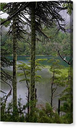 Chile South America Temperate Canvas Print by Scott T. Smith