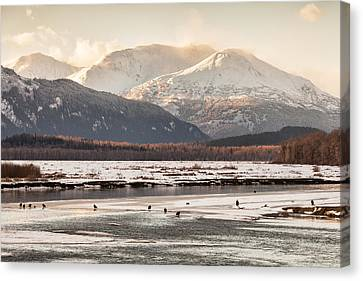 Chilkat Bald Eagle Preserve In Winter Canvas Print
