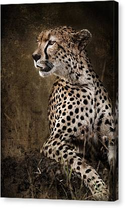 Chill Cheetah Canvas Print by Mike Gaudaur