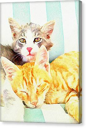 Chill Out Cats Canvas Print by Walker and  Haberfield