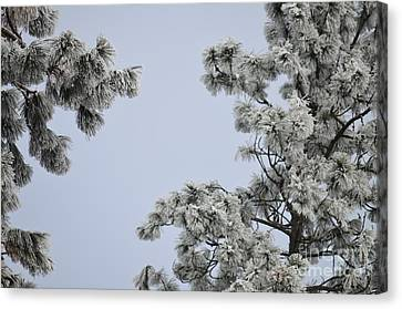 Chill Tree Canvas Print by Greg Patzer