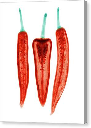 Chilli Peppers Canvas Print by Brendan Fitzpatrick