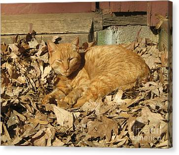 Chillin' Out Canvas Print by Wendy Coulson
