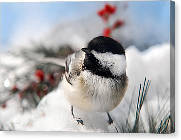 Chilly Chickadee Canvas Print by Christina Rollo