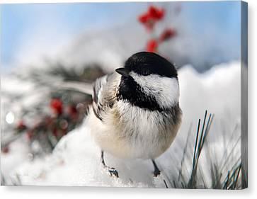 Chilly Chickadee Canvas Print