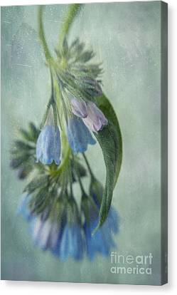 Chiming Bells Part I Canvas Print by Priska Wettstein
