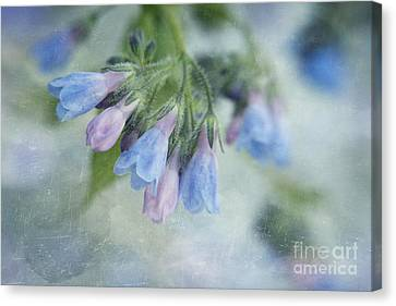 Chiming Bells Part II Canvas Print by Priska Wettstein