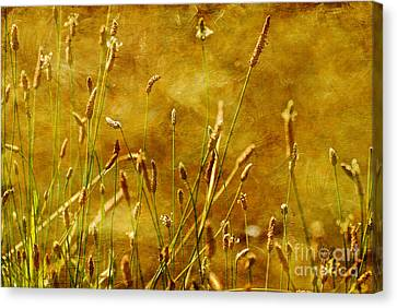 Chimney Sweeps Canvas Print by Lois Bryan