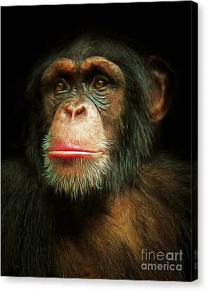 Chimp 20150210brun Canvas Print by Wingsdomain Art and Photography