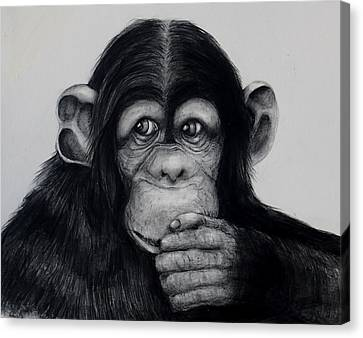 Chimp Canvas Print by Jean Cormier
