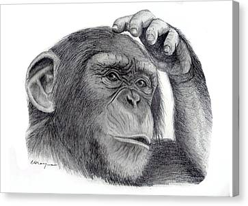 Chimp Canvas Print by Mary Mayes