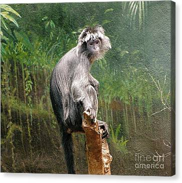 Chimpanzee At Rest Canvas Print