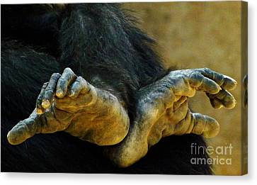Canvas Print featuring the photograph Chimpanzee Feet by Clare Bevan