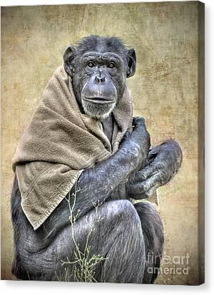 Canvas Print featuring the photograph Chimpanzee by Savannah Gibbs