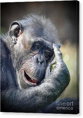 Canvas Print featuring the photograph Chimpanzee Thinking by Savannah Gibbs