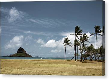 Chinaman's Hat Island Canvas Print by Joanna Madloch