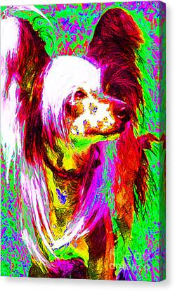 Chinese Crested Dog 20130125v2 Canvas Print by Wingsdomain Art and Photography