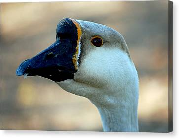 Chinese Goose Canvas Print by Lisa Phillips