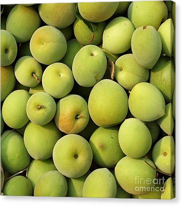 Chinese Green Plums Canvas Print by Yali Shi