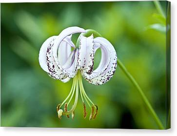 Canvas Print featuring the photograph Chinese Lily by Lana Enderle