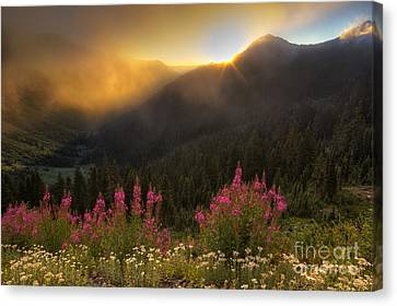 Chinook Pass Sunrise II Canvas Print by Mark Kiver