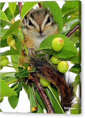 Canvas Print featuring the photograph Chip Or Dale by Barbara Chichester