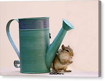 Chipmunk And Watering Can Canvas Print by Peggy Collins