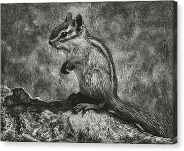 Chipmunk On The Rocks Canvas Print by Sandra LaFaut