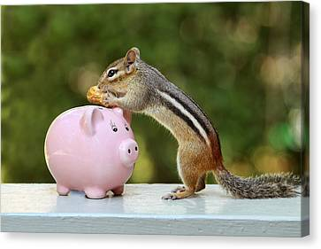 Chipmunk Saving Peanut For A Rainy Day Canvas Print by Peggy Collins