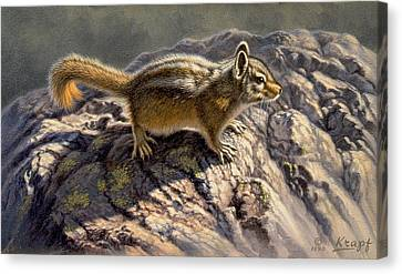 Chippy On The Rocks Canvas Print by Paul Krapf
