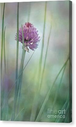 Chive Garden Canvas Print by Priska Wettstein