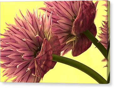 Chive Macro Beauty Canvas Print