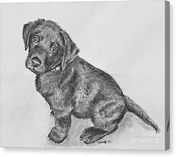 Chocolate Lab Puppy Artwork Canvas Print by Kate Sumners