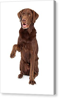 Chocolate Labrador Paw Extended Canvas Print by Susan Schmitz