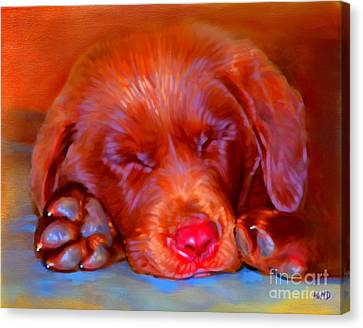 Chocolate Labrador Puppy Canvas Print by Iain McDonald