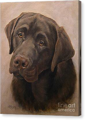 Chocolate Labrador Retriever Portrait Canvas Print by Amy Reges