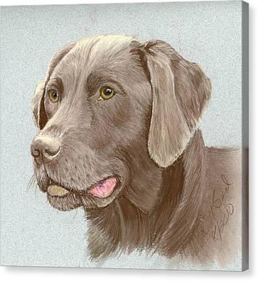 Chocolate Labrador Retriever Canvas Print by Ruth Seal
