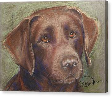 Chocolate Labrador Canvas Print by Sciandra
