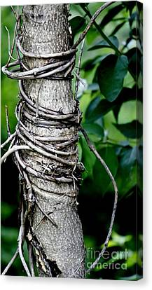 Canvas Print featuring the photograph Choke by Lilliana Mendez