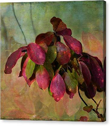Chokecherry Leaves Canvas Print by Shirley Sirois