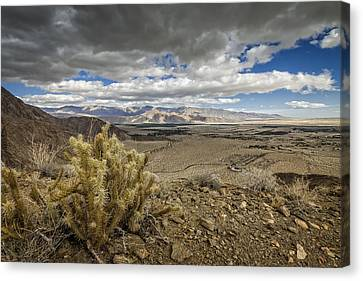 Cholla View Canvas Print