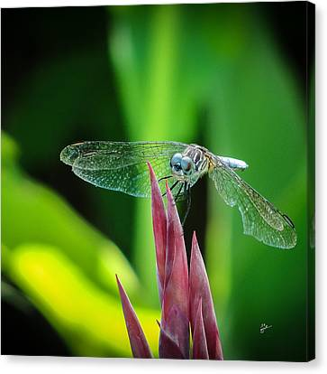 Chomped Wing Squared Canvas Print by TK Goforth